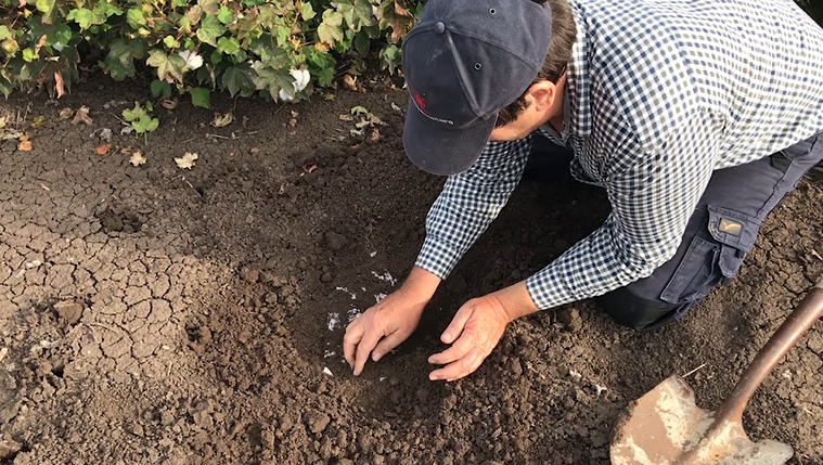 On World Cotton Day 2020, we look at the importance of soil health in the Australian cotton industry. In early 2020, Gunnedah cotton grower Scott Morgan buried a pair of cotton undies and a pair of polyester undies in his soil. Weeks later, he dug them up and the results are incredible. Soil health expert Dr Oliver Knox also provides analysis of what we're seeing in this five-minute video.
