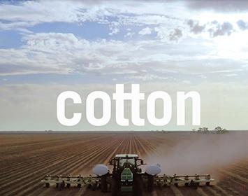 Cotton Truths